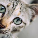 Gatta lanciata dal secondo piano, l'Associazione Tuteliamoci accoglie le richieste a tutela degli animali